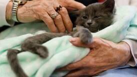 Anchorage elders help felines prepare for adoption during 'Kitten Social Hour'