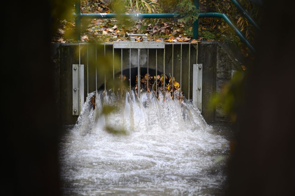 Water flows out of a storm drain into Chester Creek near C. Street in Anchorage, during a hard rain, Sept. 20, 2019. (Anne Raup / ADN)