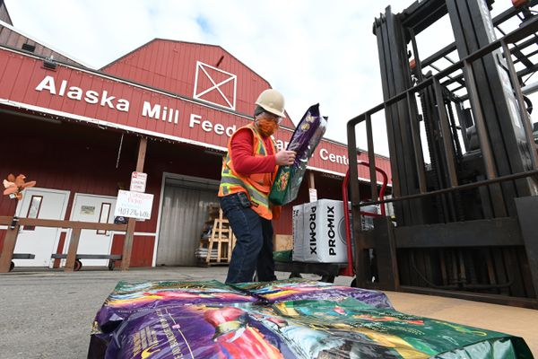 Michael Yang prepares a dog food order for curbside pickup at Alaska Mill Feed & Garden Center on Tuesday, April 14, 2020. The business is open to a limited number of customers at a time in the store and has curbside pickup during the COVID-19 pandemic. (Bill Roth / ADN)