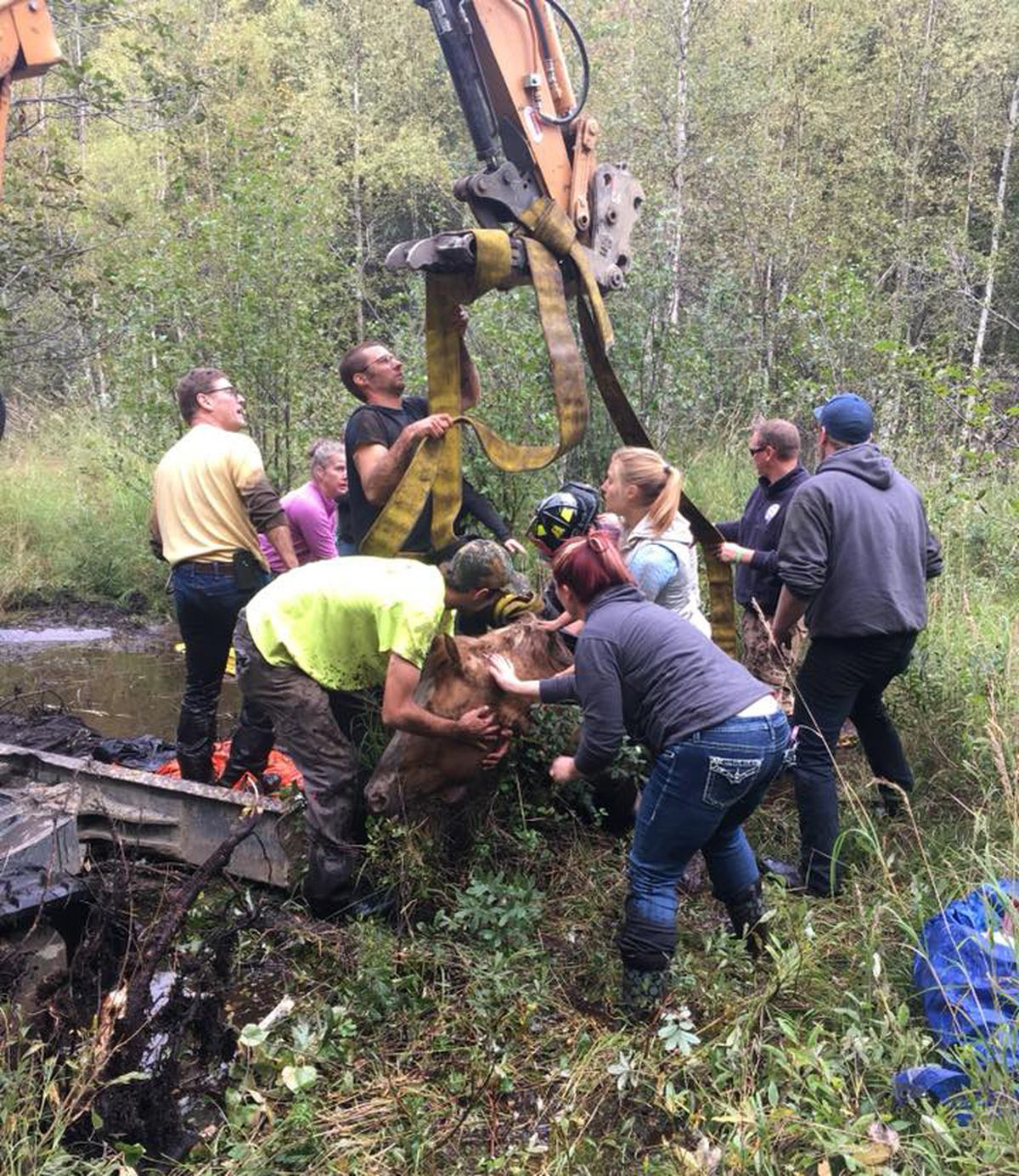 Volunteers work to free Luna, a 13-year-old quarter horse, from a swamp in Chugiak on Friday, Aug. 31, 2018. (Photo by Chugiak Volunteer Fire and Rescue Department)