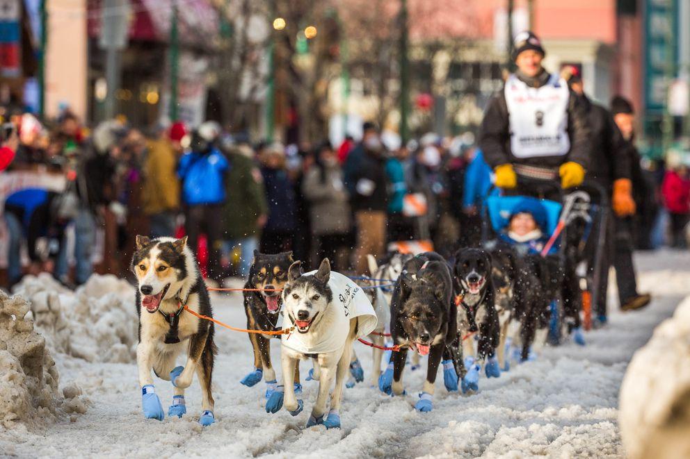 Norwegian musher Thomas Waerner, his Iditarider and his team mush down Anchorage's Fourth Avenue, March 7, 2015. (Loren Holmes / ADN archive 2015)