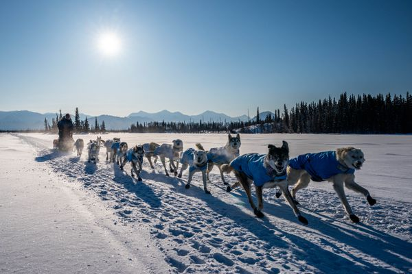 Linwood Fiedler mushes across Steele Lake in the Farewell Burn on Tuesday, March 10, 2020 during the Iditarod Trail Sled Dog Race. (Loren Holmes / ADN)