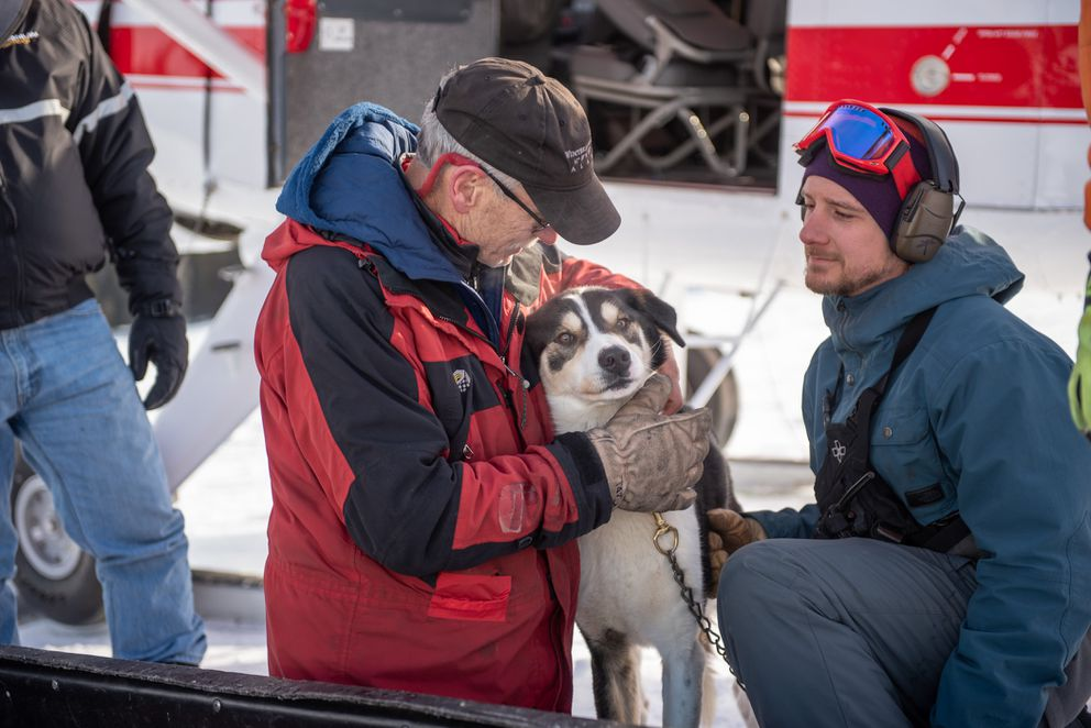 Carl Dixon, the owner of the Winterlake Lodge, cradles his 2-year-old sled dog Dillon, who escaped his tether early on Monday. Dillon was flown back to Finger Lake, where he lives, after running after Iditarod teams to the next checkpoint at Rainy Pass. (Photo courtesy Scott Dickerson / Dickerson Stills + Motion.)