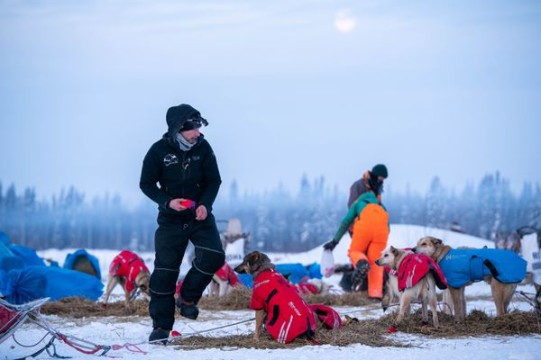 Deke Naaktgeboren puts booties on his dogs in Nikolai on Wednesday, March 11, 2020 during the Iditarod Trail Sled Dog Race. (Loren Holmes / ADN)