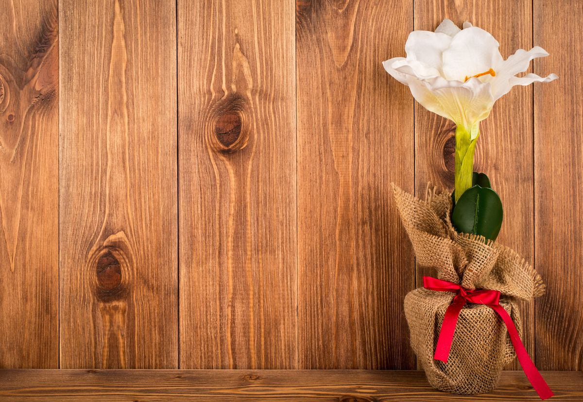 An amaryllis is easy to grow and produces beautiful, large blossoms. (Getty Images)
