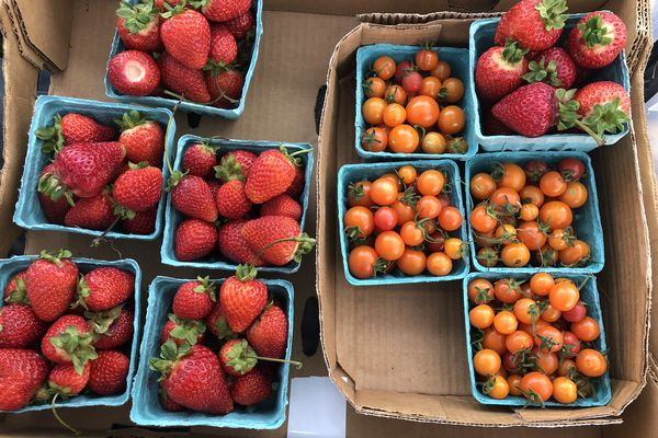 Farmers market tomatoes and strawberries. (Photo by: Julia O'Malley/ADN)