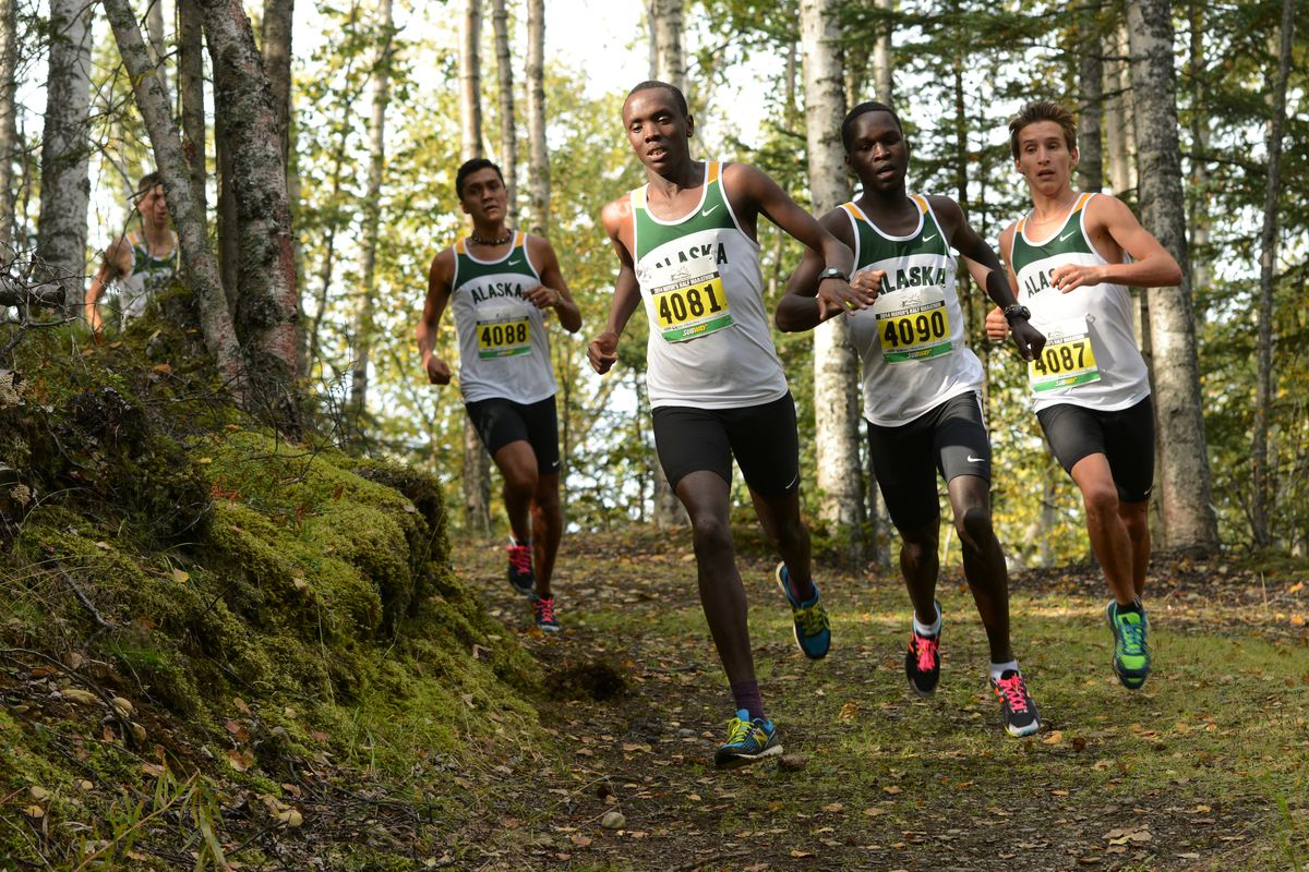 Henry Cheseto (4081) runs to victory for UAA at a 2014 cross country meet in Chugiak. (Erik Hill / ADN archive)