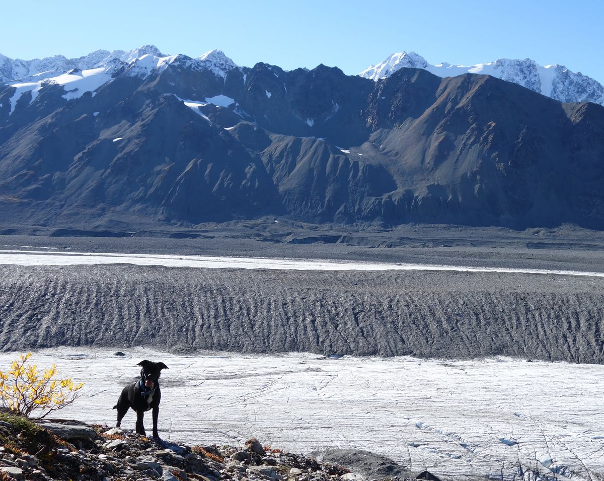 Canwell Glacier in the Alaska Range is one of many Alaska glaciers covered in large part by rocks, which can insulate the ice from warm air. (Ned Rozell)