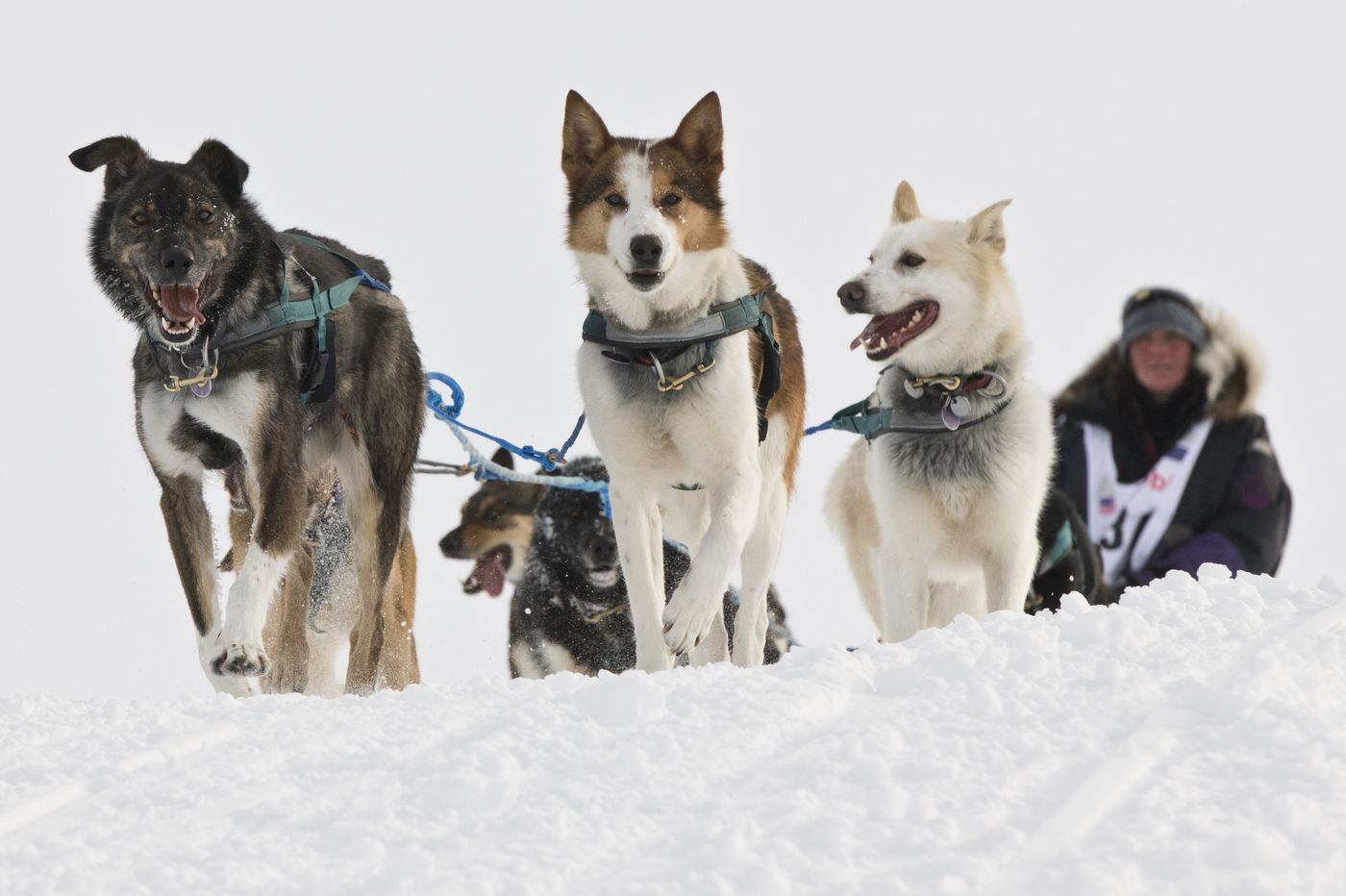 Michelle Phillips approaches Nome with her team to finish the Iditarod Trail Sled Dog Race on March 18, 2020. (Marc Lester / ADN)