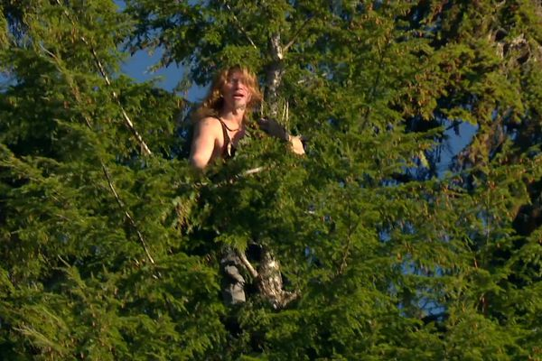 Bear Brown climbs a tree in a recent episode of