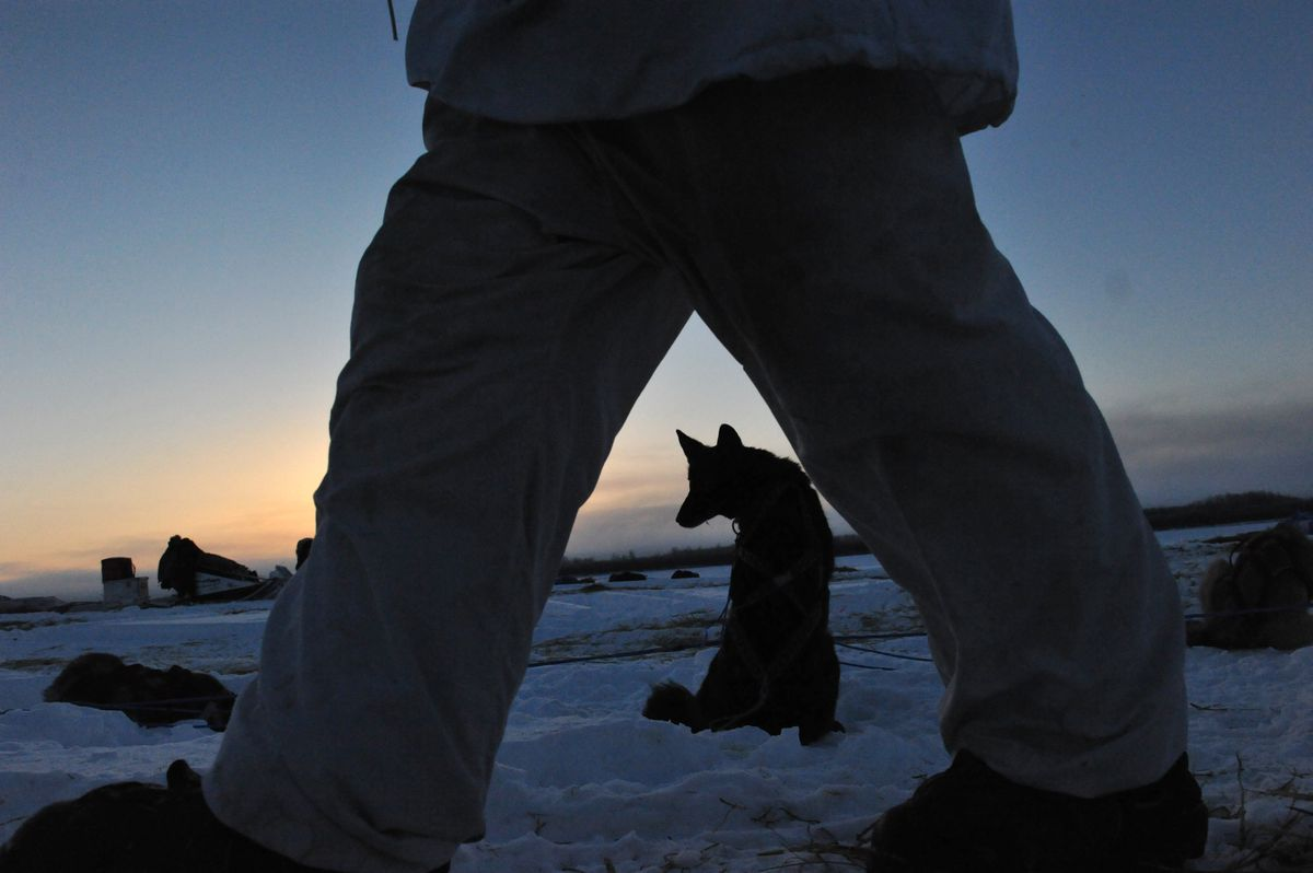 Iditarod musher Cody Strathe tends to his team at the Nulato checkpoint Sunday. (Bob Hallinen / Alaska Dispatch News)