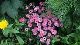 Video tour: A Spenard garden, from spring to full bloom