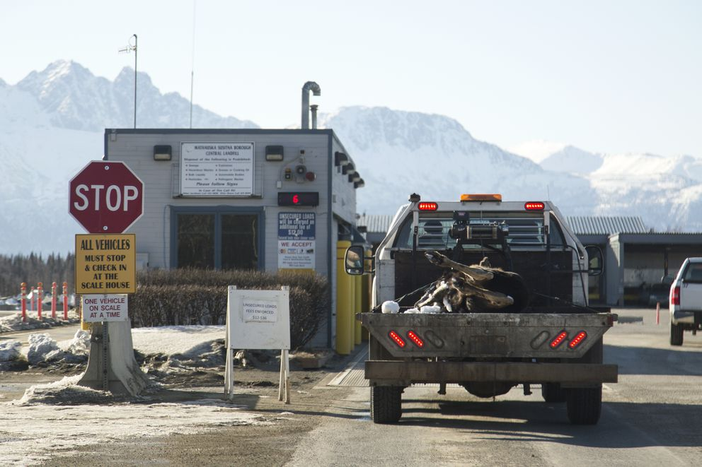 Adead moose calf is taken to the Matanuska-Susitna Borough landfill on March 25 in Palmer. Terry Berger, the landfill operations unit supervisor, saidhe hasn't seen an increase in moose brought in this winter, even with the significant snowfall. (Rugile Kaladyte / Alaska Dispatch News)