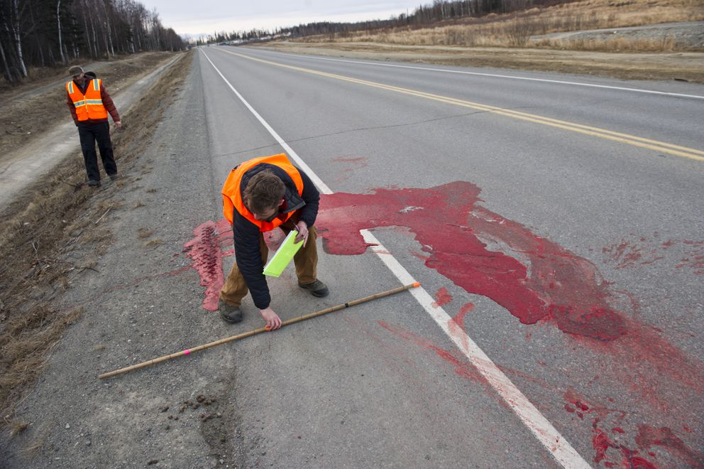 Nick Jensen, a technician for the Alaska Department of Fish and Game, takes measurements at the site of a moose-vehicle collision on Monday. The collision had occurred two days earlier. Fish and Game research coordinator Michael Guttery is at left. (Marc Lester / Alaska Dispatch News)