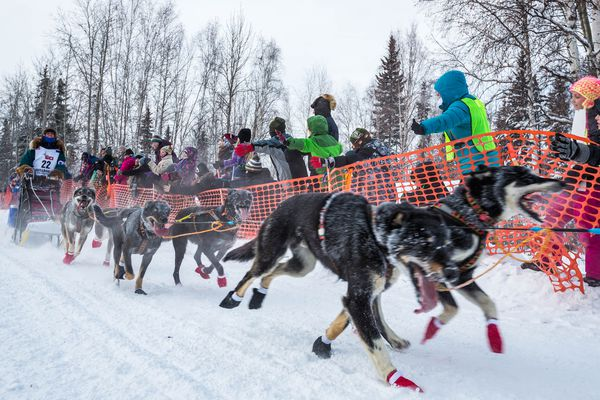 Jodi Bailey mushes down Broadmoor Avenue in Fairbanks during the start of the Iditarod Trail Sled Dog Race on Monday, March 9, 2015. The 1,000-mile race normally starts near Anchorage but was forced north due to unusually warm weather and a lack of snow. (Loren Holmes / Alaska Dispatch News)