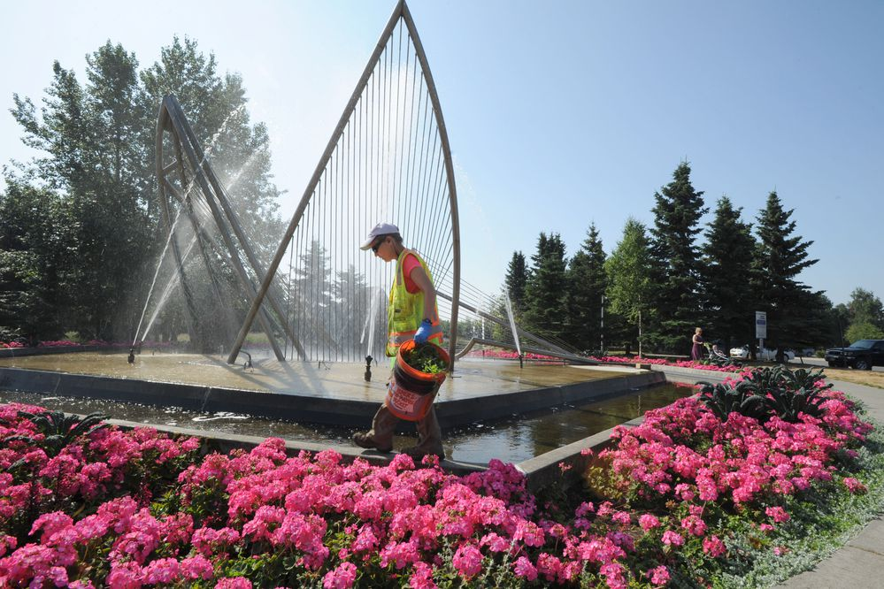 MOA Parks and Beautification worker Leslie Lowrie works on the garden around Loussac Library's fountain, Friday, July 5, 2019. She said working near the water helped her keep cool. (Anne Raup / ADN)
