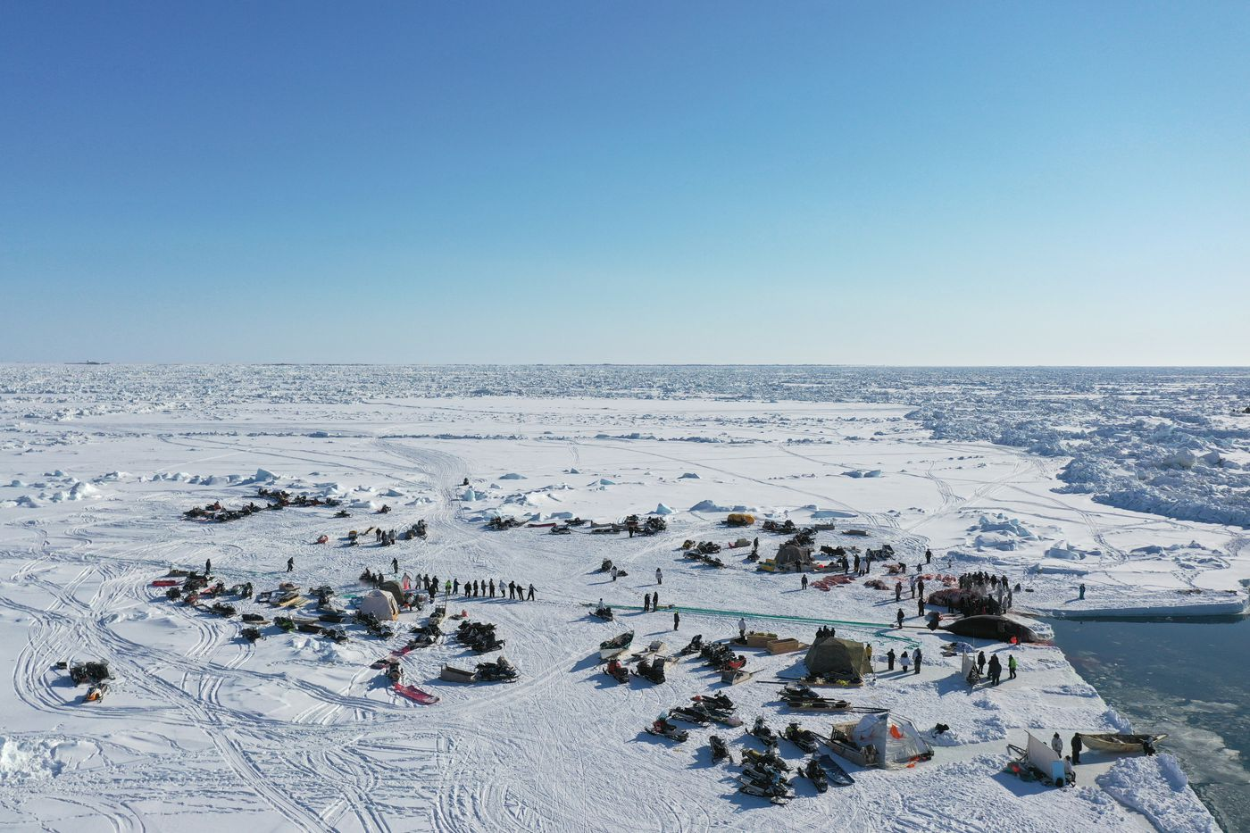 Utqiagvik community members join together to tow a bowhead whale to shore after three successful hunts in a single day in April. In a good year, about 10 whales are caught in spring whaling season and shared among the community for food throughout the year. (Photo by Yves Brower)