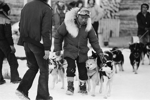 Herbie Nayokpuk lines out his team at the Nikolai checkpoint during the 1981 Iditarod Trail Sled Dog Race on March 9, 1981. (Marc Olson / ADN archive)