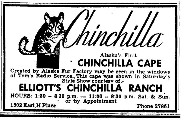 An advertisement for a chinchilla cape from Elliott's Chinchilla Ranch from Anchorage Daily Times Feb. 19, 1953.