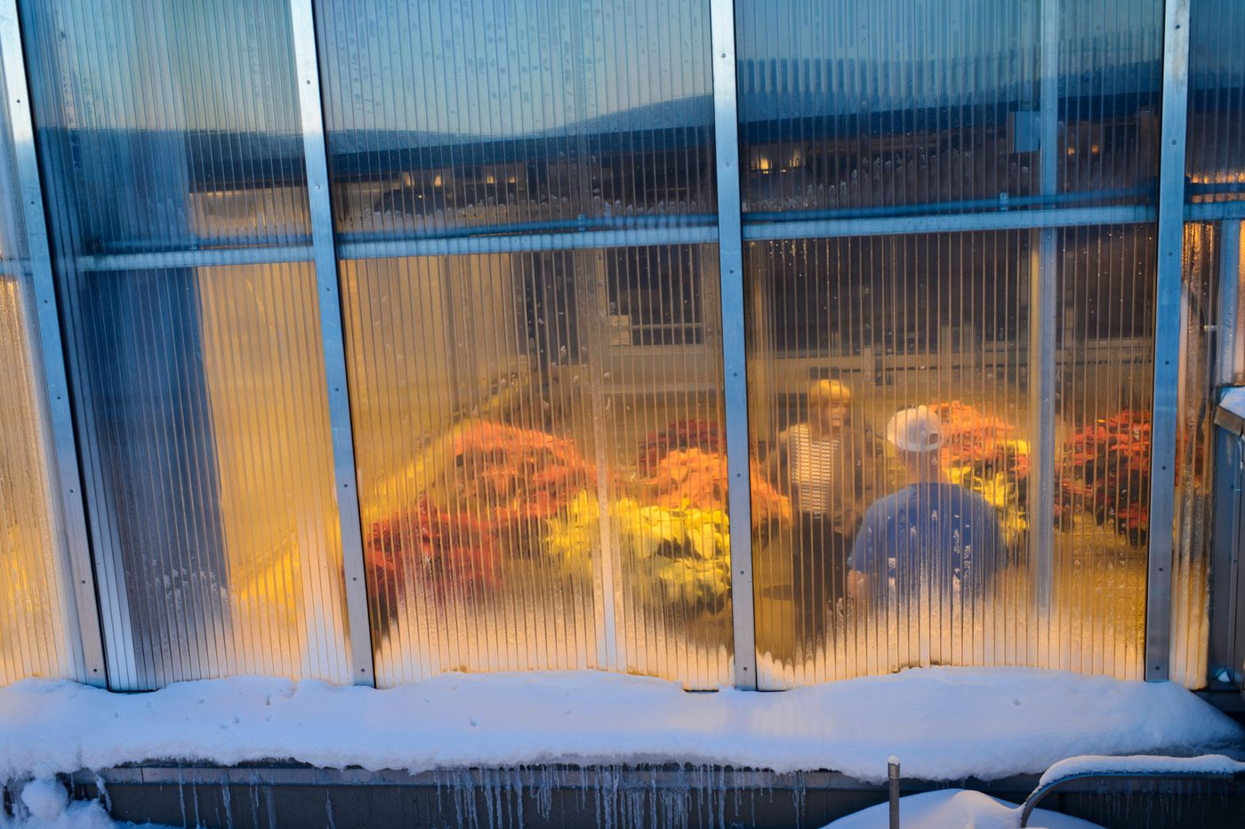 People work inside a greenhouse at UAF's Arctic Health Research Building. (Marc Lester / ADN)