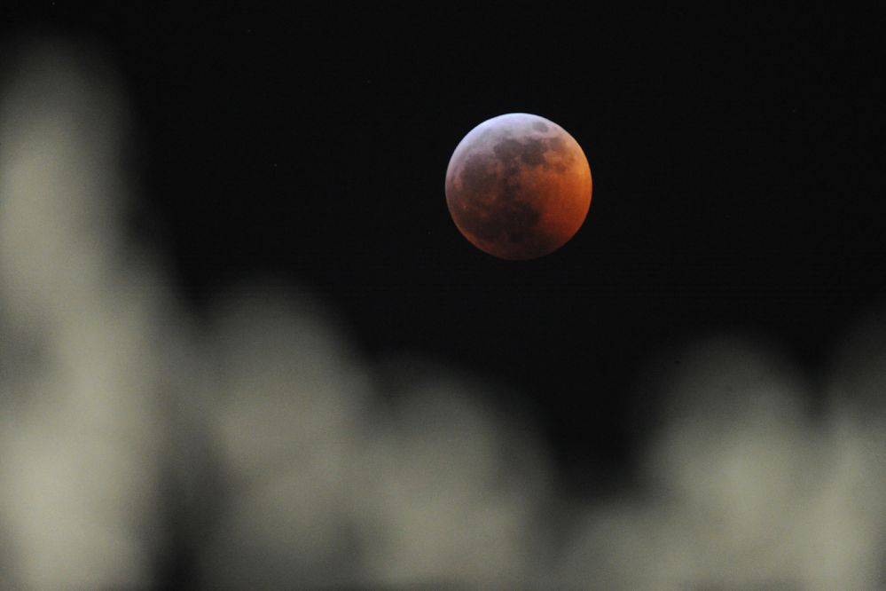 A super blood wolf moon rises above frost-covered trees in Midtown Anchorage on Sunday, Jan. 20, 2019, as the moon passed through the Earth's shadow during the total lunar eclipse. (Bill Roth/ ADN)