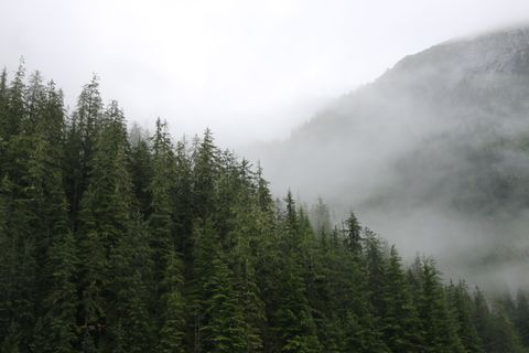 The Tongass National Forest in Southeast Alaska. (Getty Images)