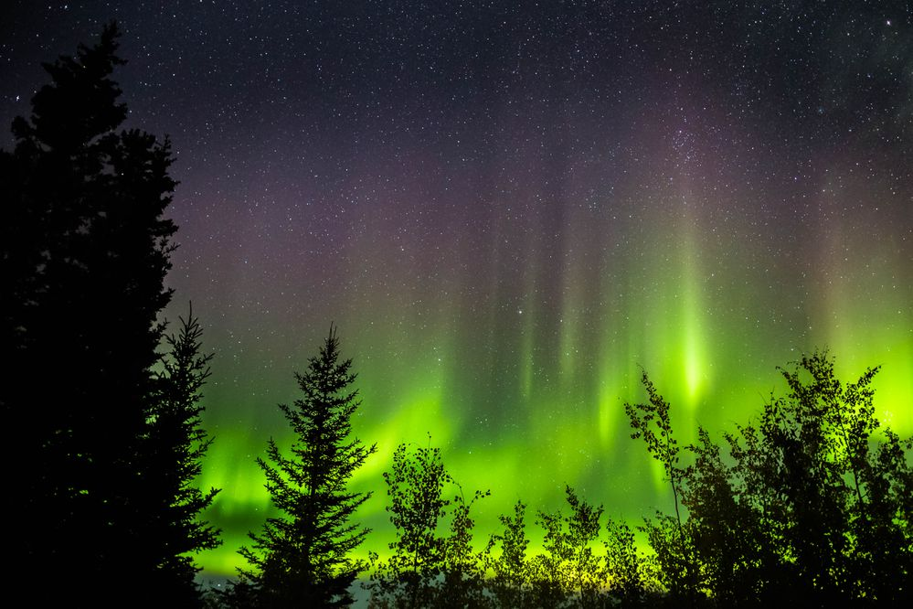 The northern lights dance above Tok, Alaska on Sep. 13, 2013. (Loren Holmes / Alaska Dispatch News)