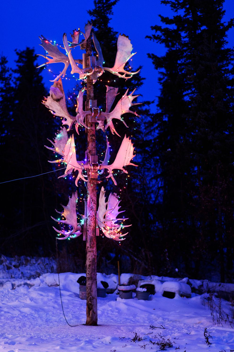 Moose antlers are decorated with lights outside Bill Zibell's home in Noorvik on December 2, 2018. (Marc Lester / ADN)