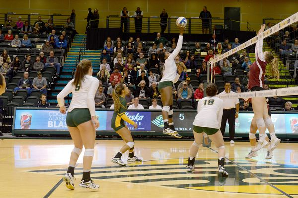Volleyball fans watch as Chrisalyn Johnson, of UAA, hits the volleyball against Chico State in the 2017 West Region Showcase at the Alaska Airlines Center at UAA in Anchorage, Alaska on Thursday, Sept. 7, 2017. (Bob Hallinen / Alaska Dispatch News)