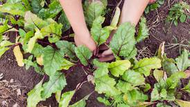 Thin your garden. It may be painful now, but you'll be rewarded.