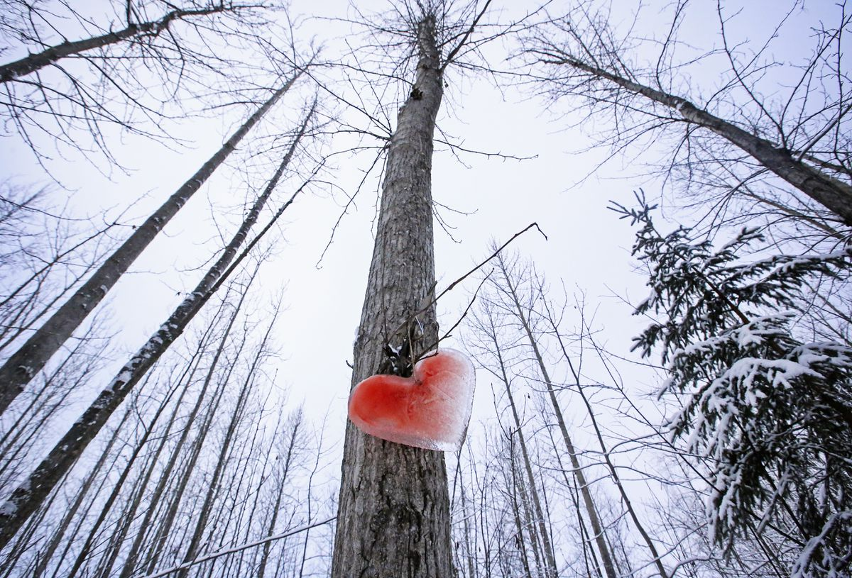 A heart made from ice hangs on a tree along the Cheney Lake trail in East Anchorage on Feb. 4. (Emily Mesner / ADN)