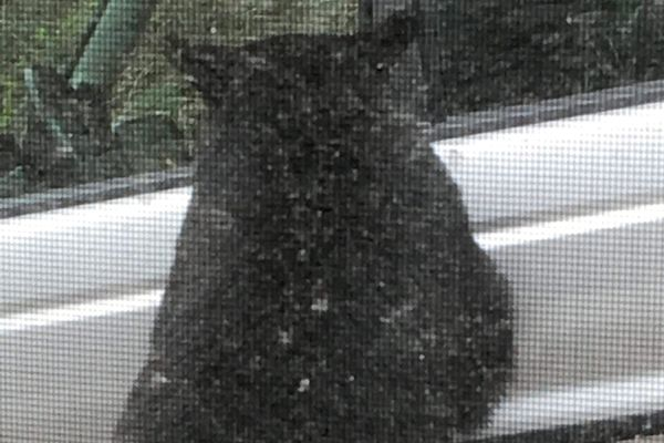 Michaela Canterbury watched from her bathroom window as a black bear pawed at the silver SUV parked outside her home near the Eagle River Nature Center in mid-May, 2018. She yelled at the bear to leave and it eventually walked over to the family's deck. (Photo by Michaela Canterbury)