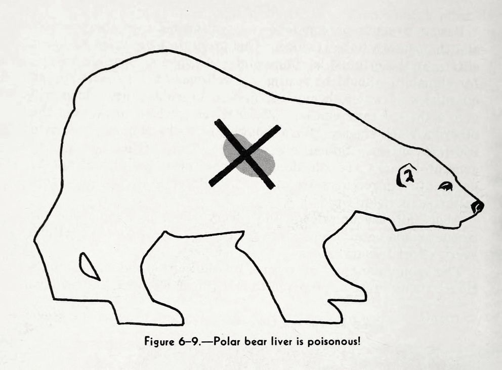 """Warning against eating polar bear liver, from a U.S. Navy survival manual, """"The Naval Arctic Operations Handbook,"""" 1949. The organ has concentrations of vitamin A that can be toxic for humans. (Courtesy Woods Hole Oceanographic Institution.)"""