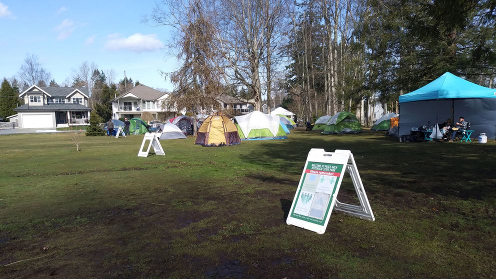 Tents abound on the eastern side of Peace Arch Park, even though park rules clearly state that no tents are allowed. (Joanne Silberner)