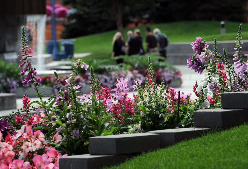 Foxglove and other flowers frame visitors to Town Square Monday morning, August 5, 2013, downtown. (Erik Hill / ADN)