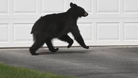 Anchorage bear sightings flourish on social media, taking bear awareness to the next level