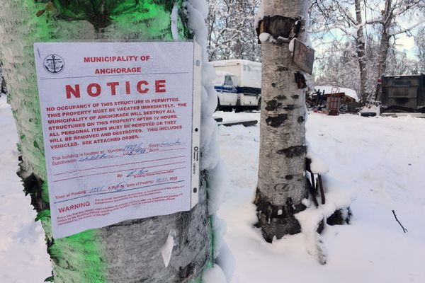 A municipal notice posted to a tree at the edge of property on Sunnyside Drive in Chugiak. On Thursday, Dec. 27, 2018 the municipality destroyed two structures on the property due to unsafe conditions. (Matt Tunseth / ADN)