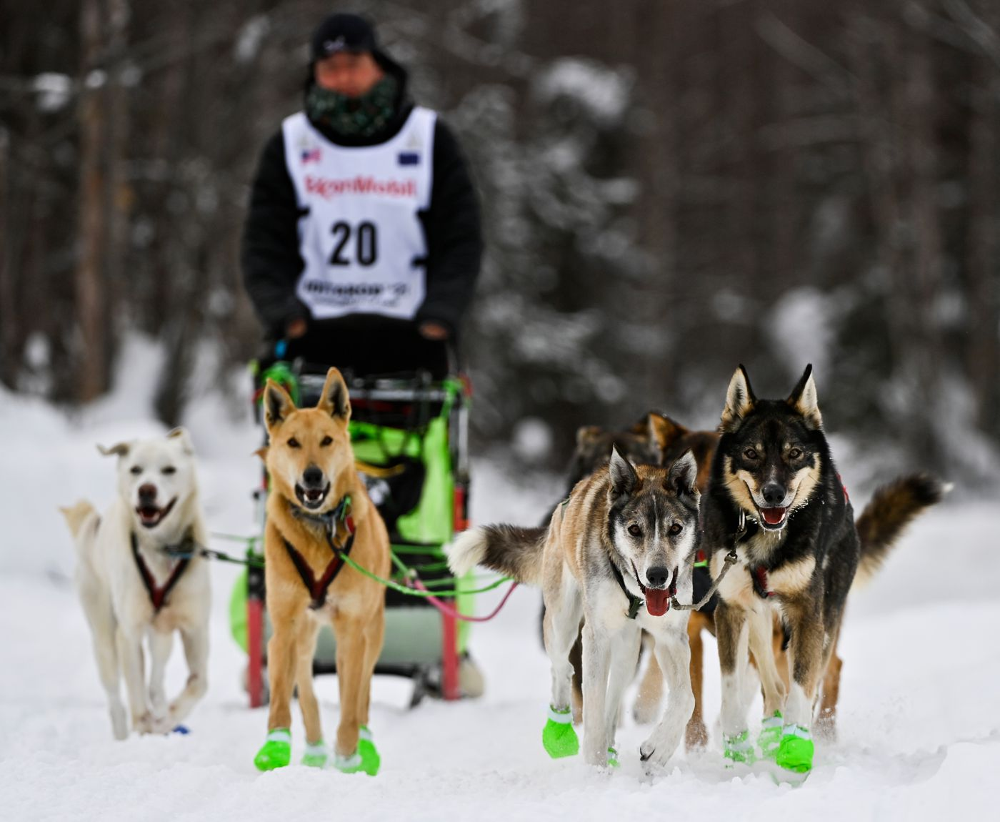 Six dogs bring Ryan Redington into the finish of the 2021 Iditarod Trail Sled Dog Race on March 15, 2021. (Marc Lester / ADN)