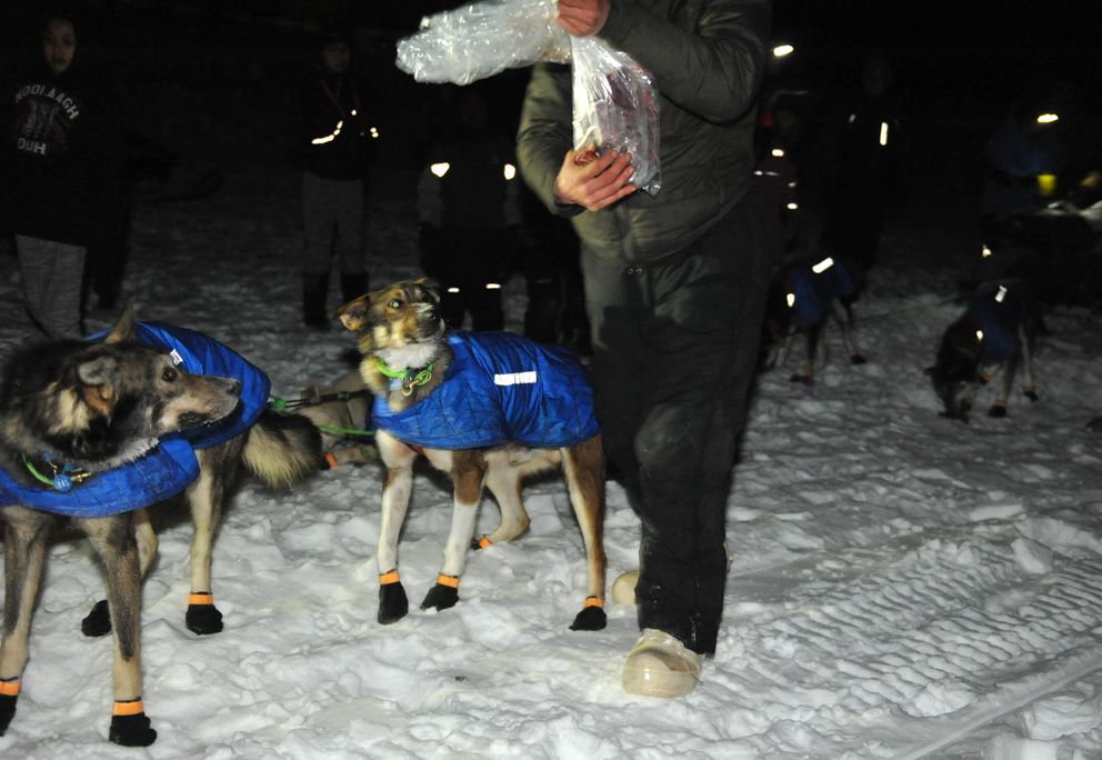 Iditarod musher Nicolas Petit snacks his dog team at the Nulato checkpoint before moving on down the trail Saturday. (Bob Hallinen / Alaska Dispatch News)