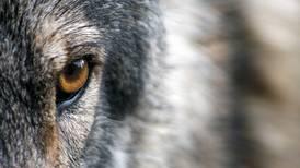 Killing predators isn't always wise game management