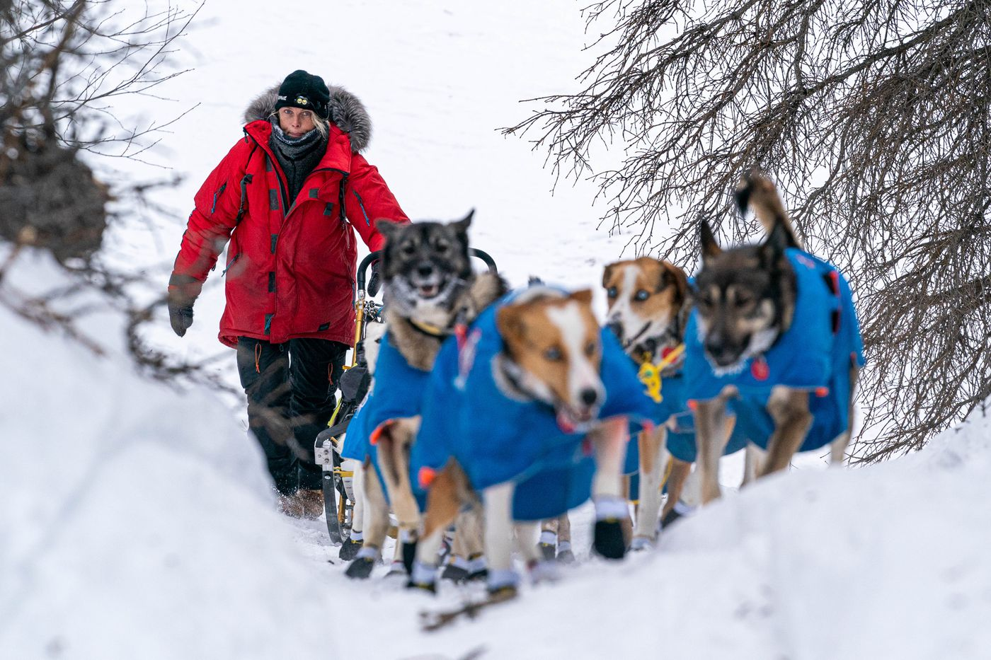 Mille Porsild mushes up a hill before Finger Lake on Sunday, March 14, 2021 during the 2021 Iditarod. (Loren Holmes / ADN)