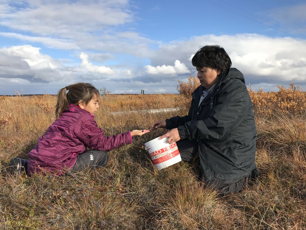 Farrah Reich, 10, picks cranberries with her grandmother Karen Triplett near Devil's Lake outside Kotzebue on Tuesday, Sept. 18, 2018. Reich was in same class at school with Ashley Johnson-Barr the past three years. (Bill Roth / ADN)