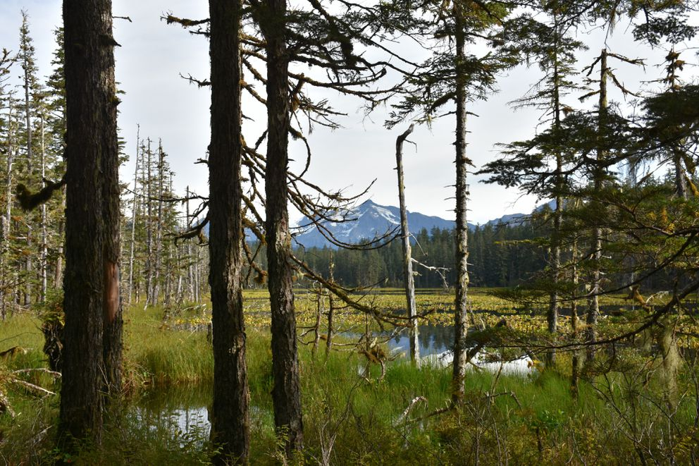 A view from the Situk Lake Trail in Yakutat, Alaska, of the Tongass National Forest. Photo courtesy of Paul A. Robbins of the U.S. Forest Service