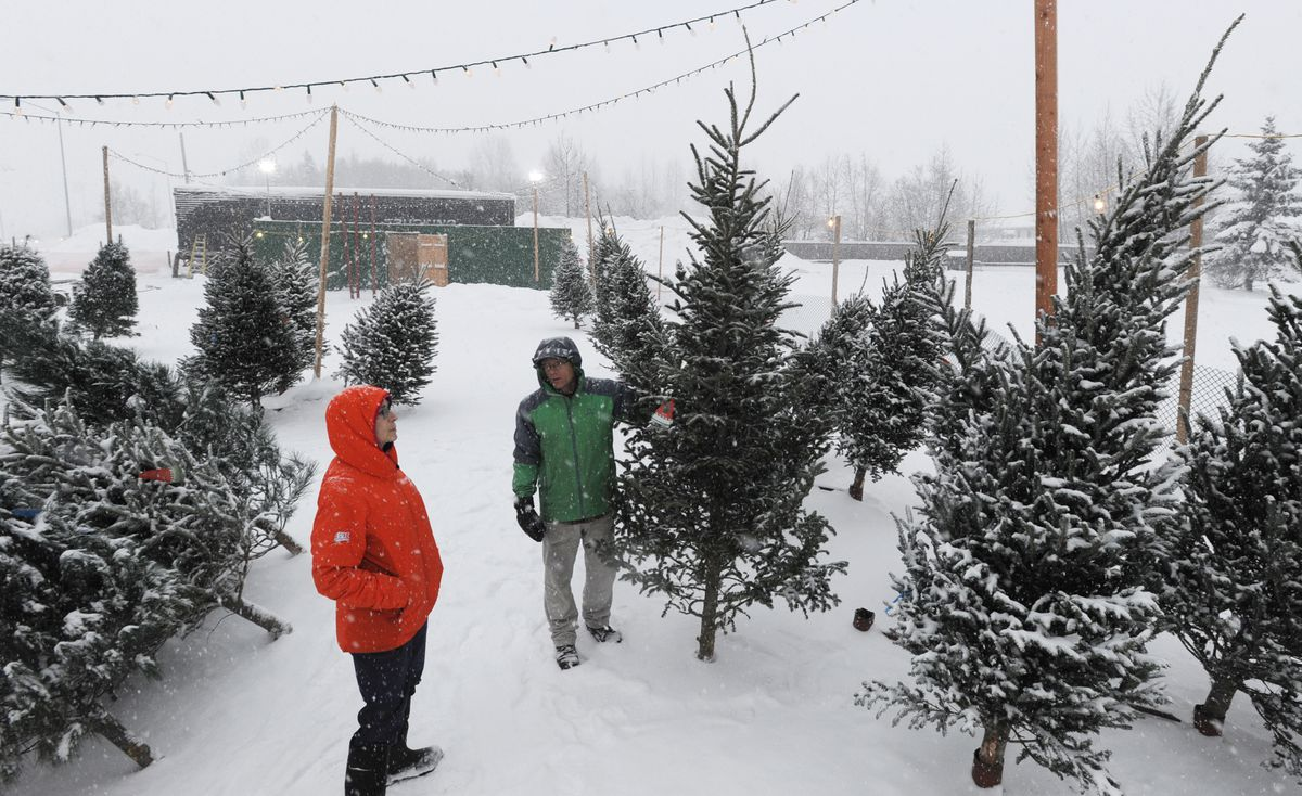 Aaron Smith, right, of Minnesota Bob's outdoor Christmas tree lot on Dimond Boulevard shows a Fraser Fir tree to Lynn Spencer during a snowstorm Tuesday. (Bill Roth / ADN)