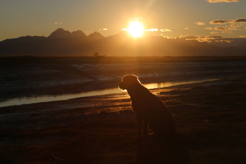 Gunner watches the sun fall below the Alaska Range in Redoubt Bay in September of 2014. (Photo by Steve Meyer)