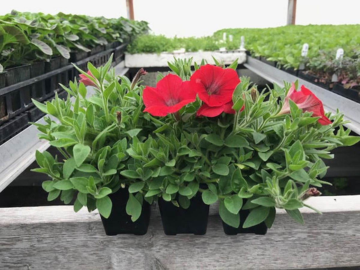 Last Frontier Flowers will have hanging baskets this week (Photo courtesy Last Frontier Flowers)