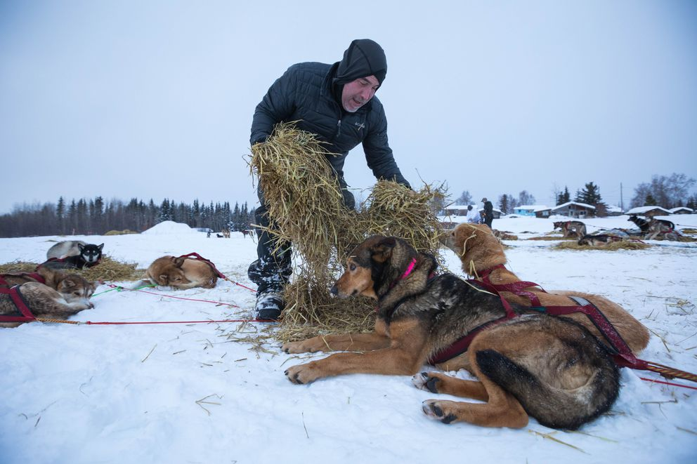 Scott Janssen gives his dogs straw at the Nikolai checkpoint on March 6 during the Iditarod Trail Sled Dog Race. (Loren Holmes / ADN)