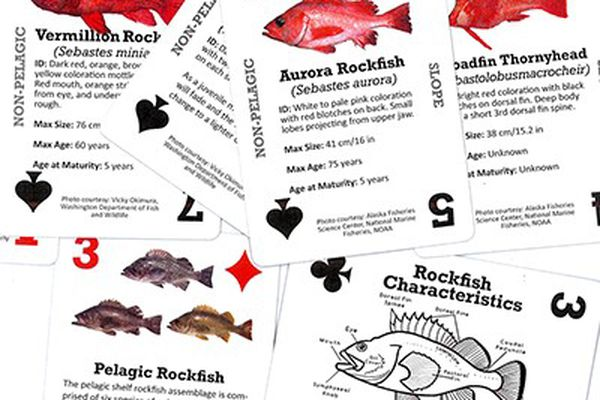 New decks of playing cards produced by the Alaska Department of Fish and Game are filled with factoids about rockfish found in Alaska waters. (Courtesy Alaska Department of Fish and Game)