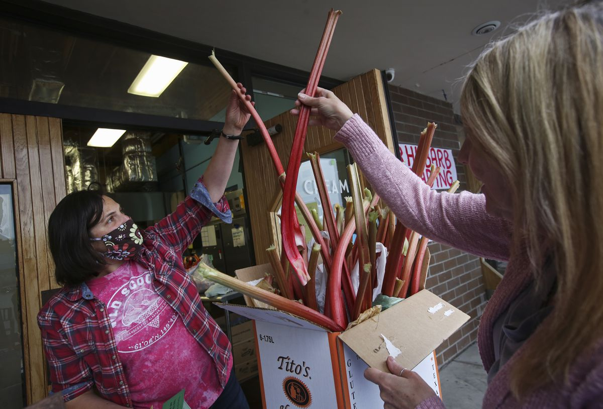 Wild Scoops Owner Elissa Brown, left, and Lavonne Taylor pull large stalks of rhubarb out of Taylor's collection and talk about its quality during the Wild Scoops rhubarb trade in Anchorage on Wednesday, June 16, 2021. Taylor took the day off to harvest her rhubarb, wash it and bring it in to the ice cream store. She traded in just over 25 pounds of rhubarb for ice cream coupons. (Emily Mesner / ADN)