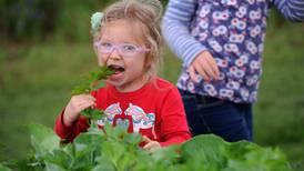 Photos: Free pickings at Grow Palmer urban garden